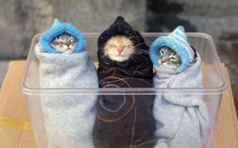 BABUSHKA CATS!!!